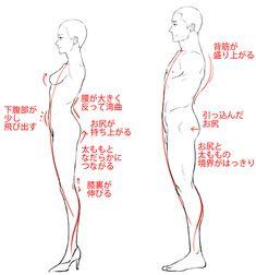 横から見た男女の体型比較 Human Drawing, Body Drawing, Drawing Practice, Drawing Poses, Drawing Tips, Figure Drawing, Anatomy Study, Body Anatomy, Anatomy Drawing