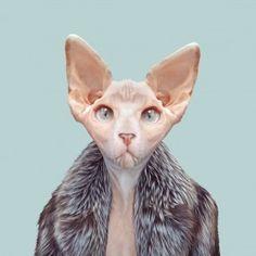 Sphynx Cat / Zoo portraits-Yago PARTAL