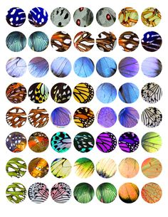 Butterfly Wing Bottle Cap Image pack