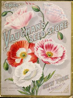 Vaughans Seed Store Catalogue  : 1904