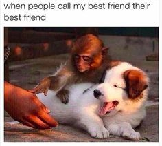 Animal Memes That Will Make Cry Because Of Laugh - 27