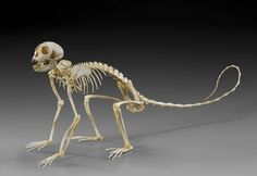 spider skeleton - Google Search