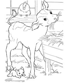 Cow Coloring page   Calf in the barn eating hay