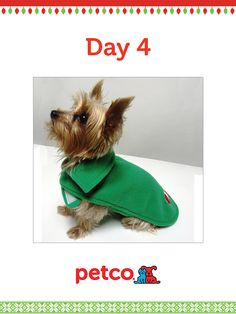 Here is today's 12 Days of Pinterest featured image (12/6/2012). Pin this Candy Cane Reversable Sweater image to one of your boards for a chance to win a 500 dollar Petco shopping spree, plus 500 dollar Petco Gift Card for a Petco Foundation Shelter/Rescue of your choice. Winner will be announced tomorrow (12/7/2012) between 12 pm and 5 pm Pacific time.