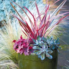 Cool Container Gardens - Texture play (Sunset Magazine) -- Love the colors!!