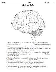 nervous system worksheet 3rd grade home school pinterest nervous system worksheets and. Black Bedroom Furniture Sets. Home Design Ideas
