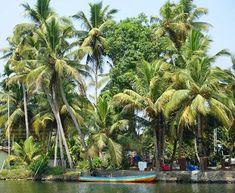 Kokospalmen säumen die Ufer der Backwaters  #taipantouristik #indien #backwaters #kerala #kreuzfahrt #boot #soschön #hausboot #natur #immereinereisewert #rundreise #wanderlust #reiseblogger #fernweh Goa, Backwaters, Kerala, Strand, Wanderlust, Plants, Indian, Cruises, Round Trip