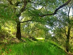 Spring in the Southern California foothills