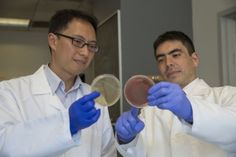 Infection with worms counters inflammatory bowel diseases (IBD) by triggering immune responses that change the mix of bacteria, or microbiome, in the gut.