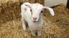 Maxie's First Adventures at Farm Sanctuary