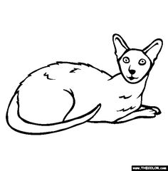 Colorpoint Shorthair Cat Online Coloring Page