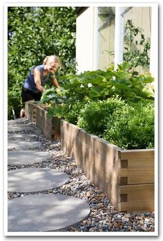 Raised planting beds with rock-scaping. Raised planting beds with rock-scaping. Raised planting beds with rock-scaping. Raised planting beds with rock-scaping. Plants For Raised Beds, Raised Garden Beds, Garden Grass, Raised Patio, Raised Gardens, Garden Paving, Raised Planter, Side Garden, Garden Path