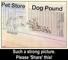 Per riflettere...Non sosteniamo chi sfrutta ripetutamente gli animali per venderne i cuccioli,non sosteniamo il commercio illegale e, soprattutto, adottiamo gratuitamente da canili/rifugi/associazioni serie..La vita non si vende e non si compra, ma si adotta