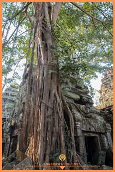 Ancient Khmer architecture,Ta Prohm temple ruins hidden in jungle in Siem Reap, Cambodia. Ta Prohm is a jungle temple in Angkor. Jungle Temple, Ta Prohm, Temple Ruins, Siem Reap, Angkor Wat, How Beautiful, Cambodia, Statue, Architecture