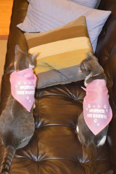 Maggie & Sara! Bandana, Dog Cat, Tote Bag, Pets, Street, How To Wear, Bandanas, Carry Bag, Tote Bags