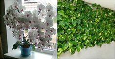 Chcete aby vaše rastliny kvitli rýchlejšie a boli krajšie? Urobte si doma toto kúzelné hnojivo. Odporúčajú ho aj záhradkári | Chillin.sk
