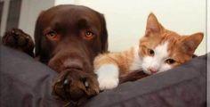 ¿Quién Dijo Que Los Perros y Gatos No Se Podían Llevar Bien