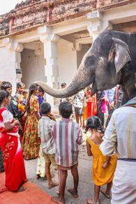 Descubre otro mundo y otra cultura en el increíble subcontinente de La India, viajes exóticos a tu alcance https://www.viajeindia.com/quienes-somos/agencia-de-viajes-para-india #agenciadeviajes #paraindia