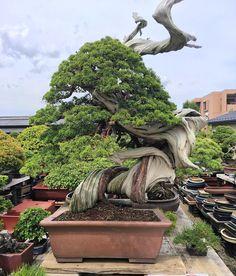 303 Best Natureart Images In 2019 Bonsai Garden Bonsai Plants