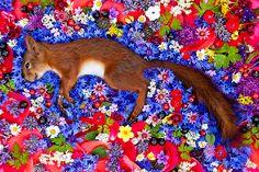 Fotógrafa Rusa Crea Hermosas Camas de Flores en Honor a Animales Muertos