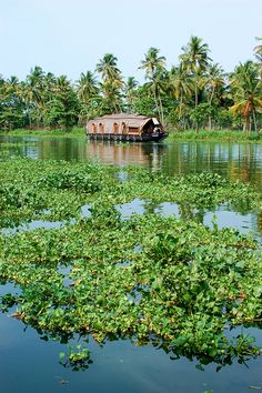 The beauty of Kerala cannot be explained by words. It can be shown through photos to prove you. Tourists like to visit beautiful places. I will explore tourist places in Kerala India. Laos, Kerala Backwaters, Kerala India, South India, Kerala Tourism, India Travel, Kerala Travel, Tourist Places, Incredible India