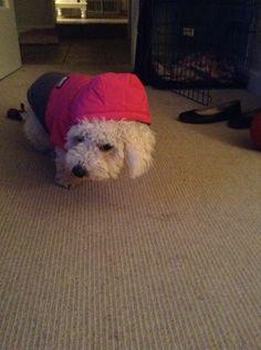 My little puppy in her winter coat