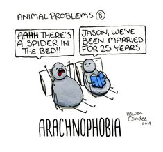 2. Animal problem: aracnophobia