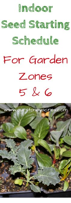 #2 - Zone 5/6 Seed Starting Schedule - A Zone 5/6 Seed Starting Schedule can start as early as January with lettuce & other greens. March & April are the months for starting most of your crops!