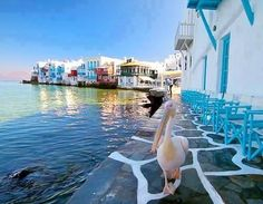 #mykonos #holidays #greece #travel #weluvmykonos #sea #greekislands #pelican