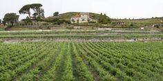 Bodegas Marqués de Vizhoja (Arbo, Pontevedra) - Ruta do Viño Rías Baixas