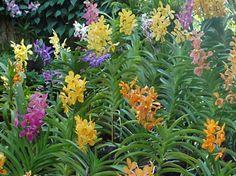 http://media-cdn.tripadvisor.com/media/photo-s/01/03/85/4d/national-orchid-garden.jpg