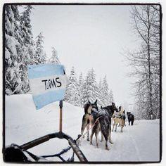 Toms and huskies Toms Flag, Girls Best Friend, Best Friends, A Husky, Siberian Huskies, Cutest Animals, Puppy Love, Make Me Smile, Doggies