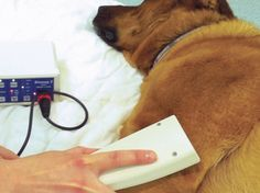 Physiotherapy for dogs at http://www.highcroftvetreferrals.co.uk/