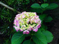 こちらはもうちょっとかな?  #art #artwork #写真 #photography #アート#myphotos  #photo #花 #植物 #flowers #風景 #landscape
