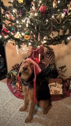 1331 Best Holiday Pets Images On Pinterest In 2018
