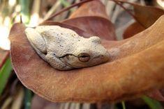 The Daily Cute: Fourteen Frog Photos