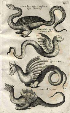medieval sea monster drawings - Google Search