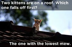 17 Jokes Only Physics Geeks Will Understand  Two kittens are on a roof, which one falls off first? the one with the lowest mew