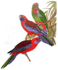 Crimson Rosella by Glenn Harris OUT-1GOO4 - $8.00 : Embroidery Passbook Mall, Instant download Embroidery Designs