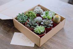 Succulent Gift Box Photo by Nicola Lemmon