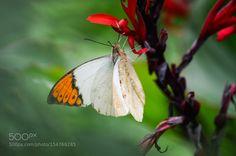 Butterfly by BridgetYang via http://ift.tt/20jU9mw