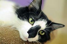 ASPCA Cat page re: vomiting