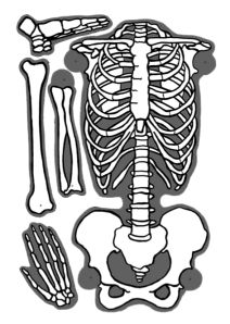 Skeleton Bones, In This Moment, Techno, Halloween, Free, Human Body Activities, Human Skeleton, World Discovery