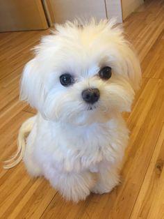 Such A Little Cutie Acirc Curren Iuml Cedil Cute Animals Baby Dogs Cute Super Cute Puppies, Cute Baby Dogs, Cute Little Puppies, Cute Dogs And Puppies, Cute Little Animals, Cute Funny Animals, Pet Dogs, Pets, Doggies