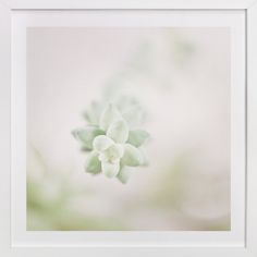 Soft Succulent No. 1 by Andi Pahl at minted.com