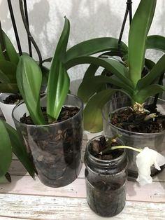 Orkide bakımı – Nero'nun Dünyasından İnciler - My site Inside Plants, Orchid Care, Flowers, Foliage, Small Garden Design, Grow Crops, Garden Seeds, Garden Care, Garden Pathway