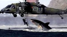 Wow, shark trying to attack a helicopter Shark Week, Orcas, Shark Pictures, Funny Pictures, Shark Images, Shark Photos, Crazy Pictures, Ponte Golden Gate, Attack Helicopter