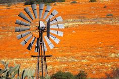 Namaqualand Wind Turbine, Clock, African, Orange, Places, Wall, Home Decor, Watch, Decoration Home