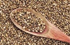 Why You Should be Eating Hemp Seeds Right Now