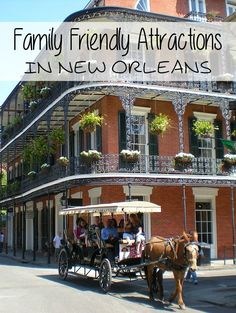 Family Friendly Attractions In New Orleans Greatest Adventure, Adventure Awaits, Audubon Zoo, Fun Days Out, Down South, Zoo Animals, Vacation Destinations, World War Ii, Friends Family